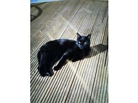 Missing black cat brockley, telegraph Hill area since Sat 28th January