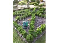 Fraser garden/ landscaping services