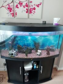 4ft by 2ft aquarium with stand fully set up