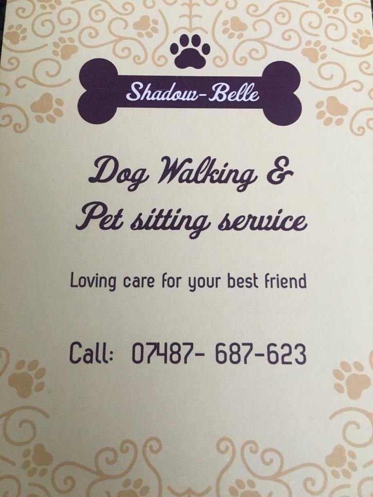 petsitters dogwalkers in liverpool merseyside gumtree dog walker holiday home care pet sitter