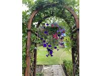 Price Reduced. Gorgeous Multi Coloured Petunia Hanging Baskets, XL and Smaller sizes