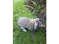 Brewster rabbit