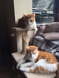 2 neutered 10 month old brothers