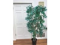Indoor artificial trees two suit conservatory