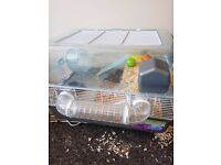 2 hamsters with cage and accessories