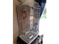FOR SALE 2 x Budgies, large cage and accessories