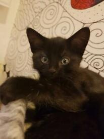 Beautiful little boy kitten