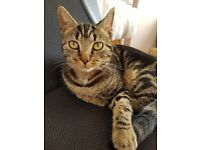 Lost Cat. Missing since 20th Dec. Answers to Lola. very friendly and dearly missed. Microchipped