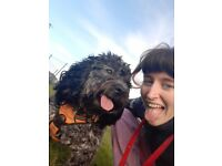 Professional Dog Walker Walking/sitting, Brighton & Hove, available 24/7