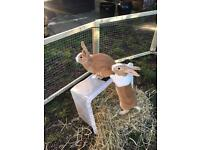 6 rabbits for sale