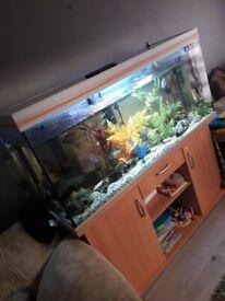 5ft 500litre fish tank