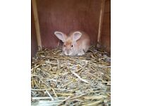 2 rabbits, hutch and a run
