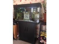 Juwel rio 125 fish tank full set up