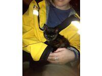 10week old female kitten for sale
