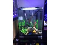 Fish tank full setup
