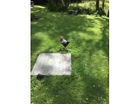 Roosters free ,two about 5 months old and one around a year old