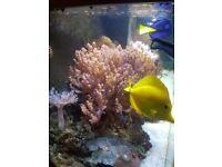 Marine coral and fish