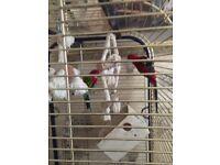 2 associatin 1 ring net parrot