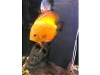 Vary different discus