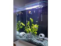 Full Tropical Fish Tank Set Up 100 ONO