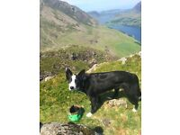 Dog walker situated in the Meadows area of Edinburgh. - Dog Walking Service.