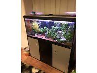 Large fish tank 120 x 125 x 40