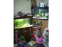 Juwel corner fish tank (Delta 80 litre) + cabinet