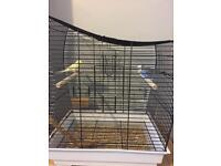 2 Budgies with cage £65 Ono