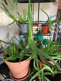 FREEBIE: House plants