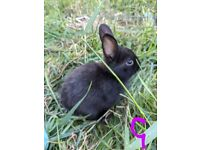 2 baby rabbits for sale