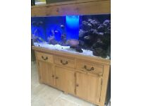 5x2x2ft solid oak wood marine tropical fish tank with setup aquarium