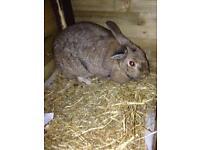Rabbit for sale.