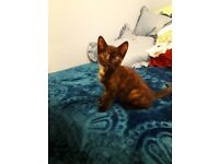 Kitten looking for a new home