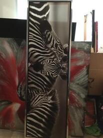 Large zebra pic