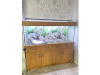 5ft Aqua one oak style 300 marine tropical cold water fish tank Aquarium setup (delivery )