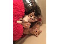 BEAUTIFUL KITTENS!