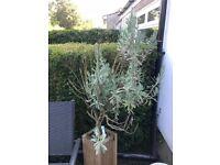 Assortment of outdoor garden plants