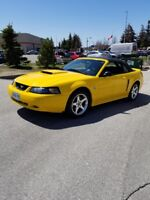 2004 Mustang Convertible! 40th Anniversary Edition! Must Be Sold