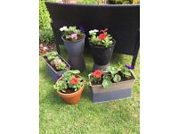 Rattan effect Planted pots and troughs