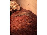 Young akie monitor