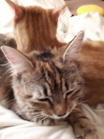 two cats need a home.