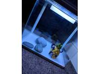 Fish Tank - All Pond Solutions 29L Aquarium