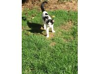 White and Black Kitten Lost