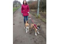 Do you need an experienced and professional Dog Walker?