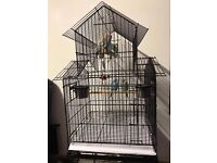 6 Lovely Budgies For Sale including Large Cage on castors