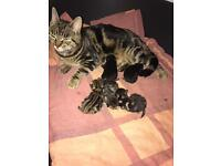 Kittens all come with there own bed and toys