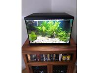 70 litre fish tank with fish