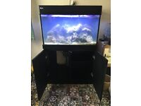 Red Sea max c 250 for sale