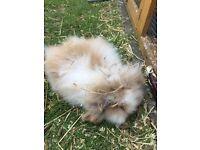 13 week old bunnies