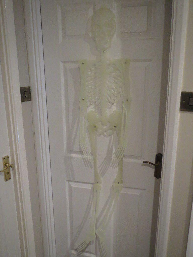 Life size glow in the dark hanging skeleton, Halloween decoration/prop